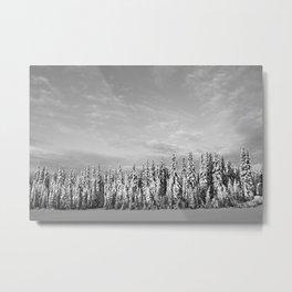 Spruce After Snow Storm Metal Print
