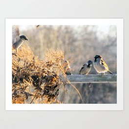 Winter Nesting Birds Art Print