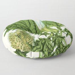 Datura stramonium (thorn apple - jimson weed or devil s snare) - Vintage botanical illustration Floor Pillow