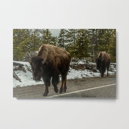 Bison on the Road, Yellowstone National Park Metal Print
