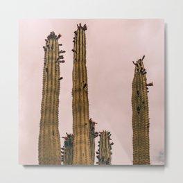 Cactus_0015 Metal Print