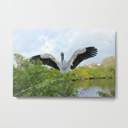 Landing Wood Stork Metal Print