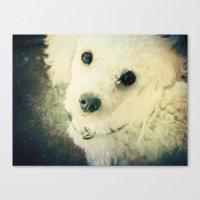 poodle Canvas Prints featuring Poodle by JMcCool