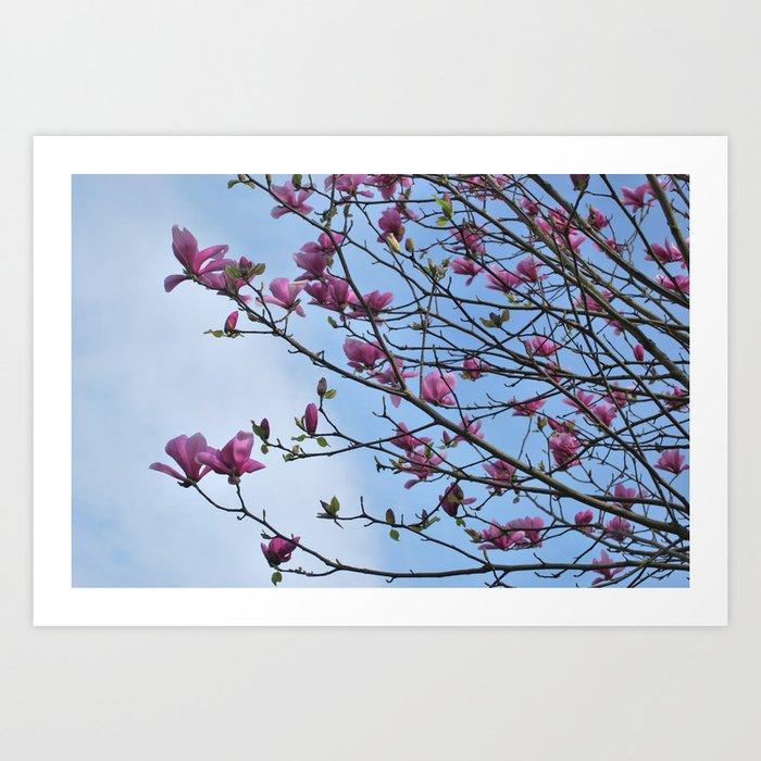 tulip magnolia Art Print