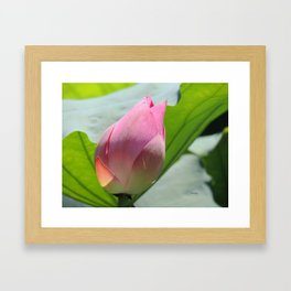 Lotus Bud in West Lake Framed Art Print