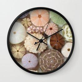 Urchin A Plenty... Wall Clock