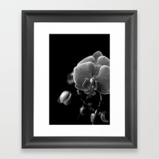 orchidea Framed Art Print