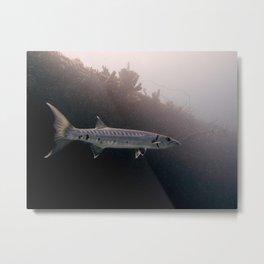 Barracuda 2 Metal Print