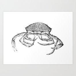 Sea Spider Art Print
