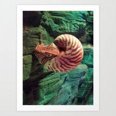 Life in a shell Art Print