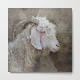 The beautiful goat Metal Print