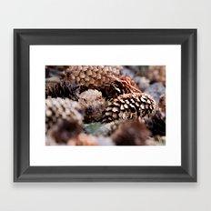 Depth Of Field Pine Cones Framed Art Print