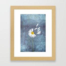 Daisy III Framed Art Print