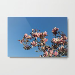 Magnolias Discovered Metal Print