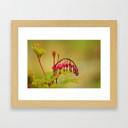 Spring heart Framed Art Print