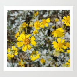 Yellow Blossoms Art Print