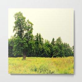 Lone Tree in a Golden Field Metal Print