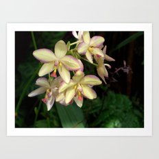 Mother of Pearl Orchids Art Print