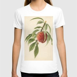 Vintage Illustration of a Peach Branch T-shirt