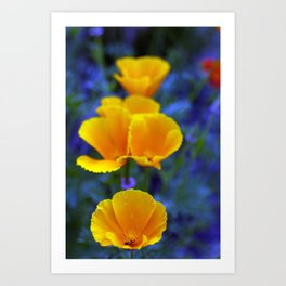 Poppies in a sea of Lobilia Art Print