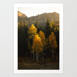 Colorado Mountain Morning Art Print