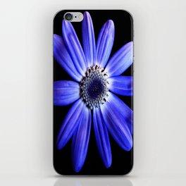 Blue gerbera iPhone Skin