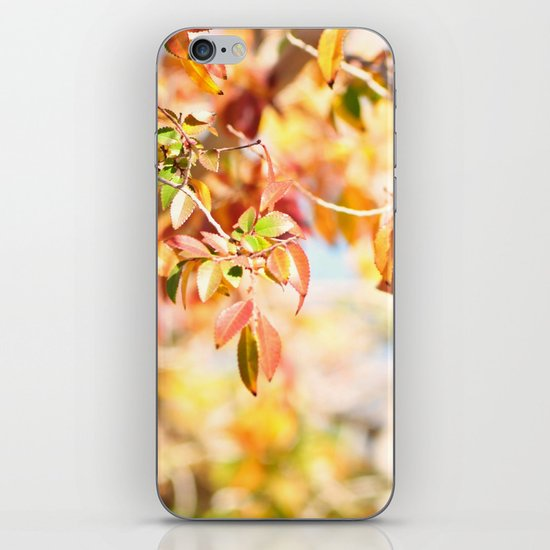 Enchanted... iPhone & iPod Skin