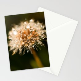 Morning dew on a flower Stationery Cards