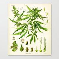 cannabis Canvas Prints featuring Cannabis Sativa by Patrick Farnsworth