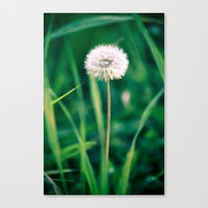 Fluffy Flower Canvas Print