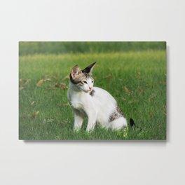 Cat by Qurratul Ayin Sadia Metal Print