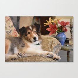 Sheltland Sheepdog and Flowers Canvas Print