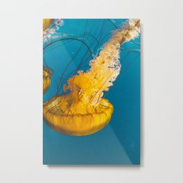 Pacific Sea Nettle Jellyfish III Metal Print