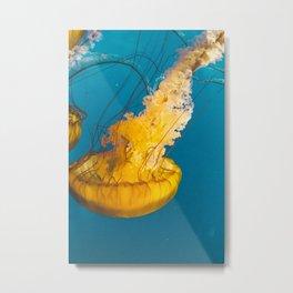 Pacific Sea Nettle Jellyfish III Metal Print