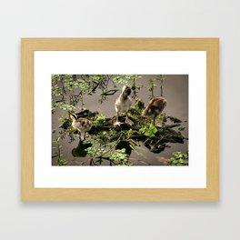Ducklings Framed Art Print