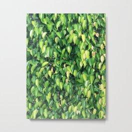 leaves background Metal Print