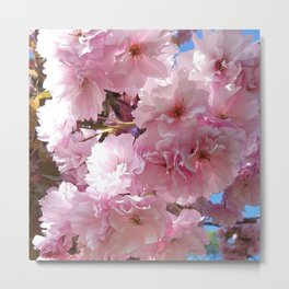 Pink blossom in spring time flower photography Metal Print