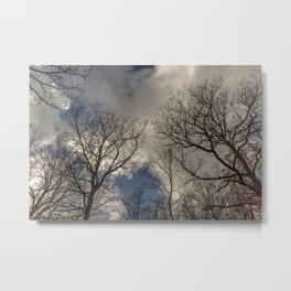 Tree tops with clouds on the background Metal Print