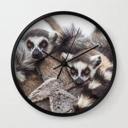 Lemur catta animals Wall Clock