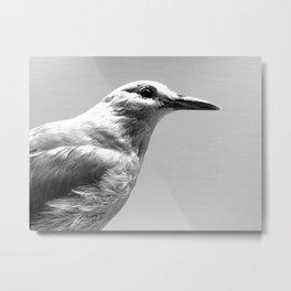 Dove profile Metal Print