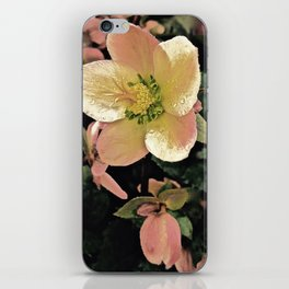 Helleborus iPhone Skin