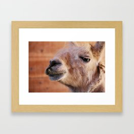 White Llama Framed Art Print