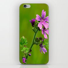 Common Mallow (Cheeseweed) iPhone & iPod Skin