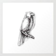 Australian Wedge-tailed Eagle Perch Tattoo Art Print