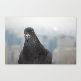 Empire State Pigeon Canvas Print