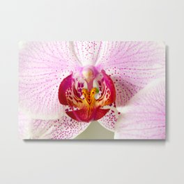 Pink points orchid 35 Metal Print