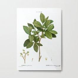 Eastern leatherwood, Dirca palustris from Traité des Arbres et Arbustes que l'on cultive en France e Metal Print