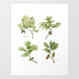 The Oaks Art Print