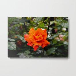 la beauté orange Metal Print