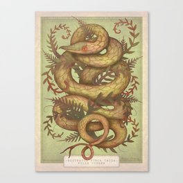 The Fern Viper Canvas Print